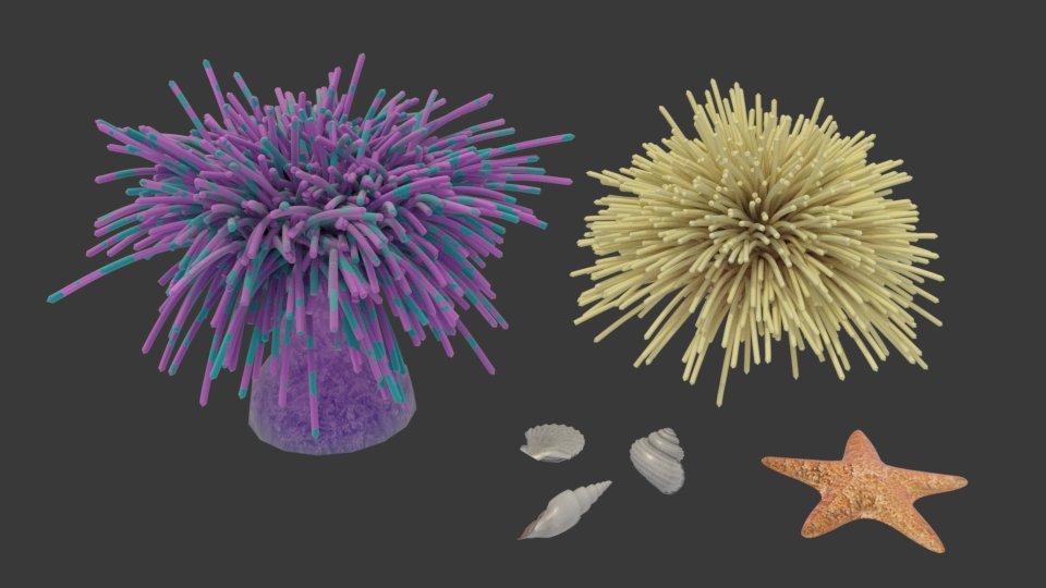 3D Modelle der Seeanemonen, Muscheln und des Seesterns