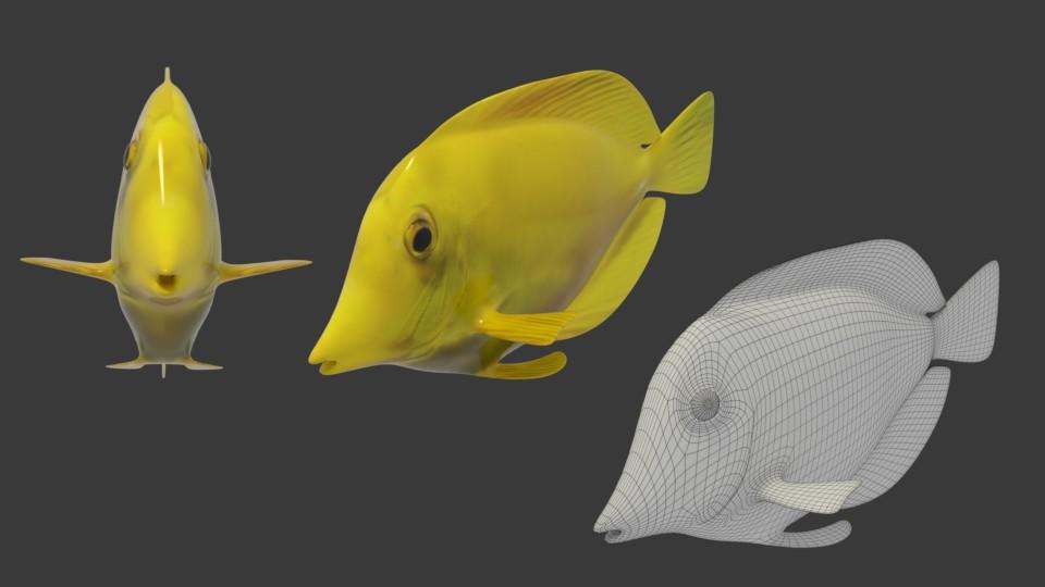 3D Modell Doktorfisch aus verschiedenen Winkeln