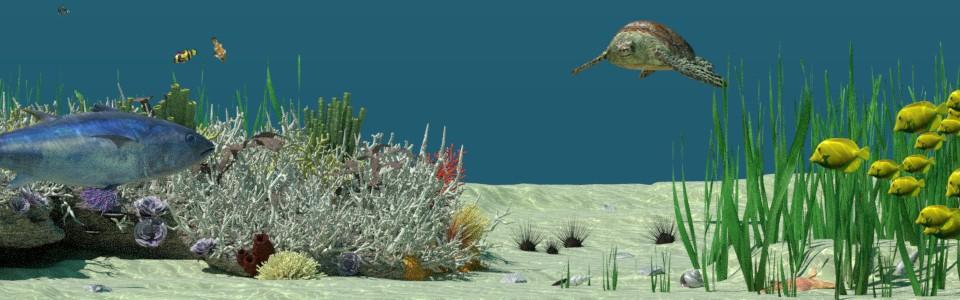 Ausschnitt Unterwasser Our Nature Cycles Render
