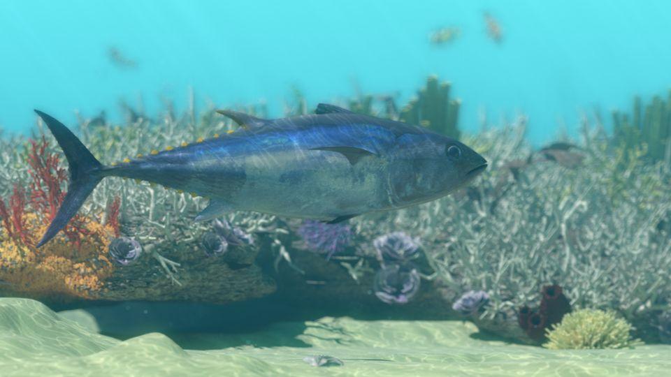 Thunfisch vor Riff